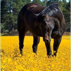 A guide to poisonous  plants for horses