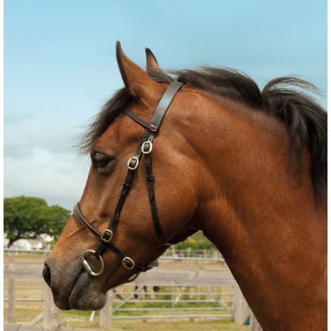 Windsor Equestrian Leather In-Hand Bridle