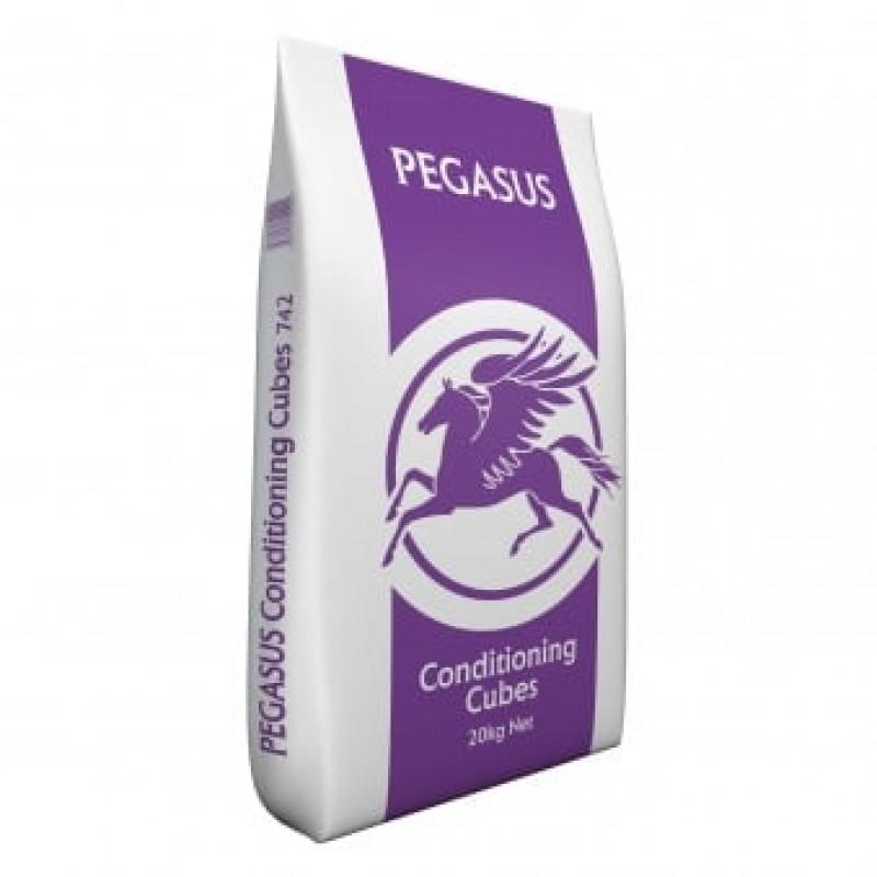 Pegasus Conditioning...